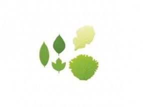 Torune - Silikon Divider - Salad
